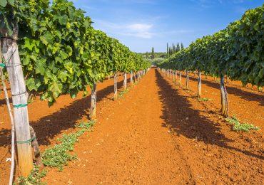 Weinreise Istrien